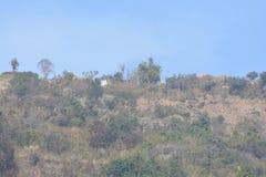 Landform зеленого холма с заводами и деревьями стоковые изображения