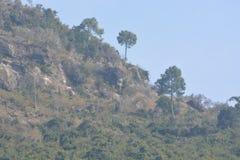 Landform зеленого холма с заводами и деревьями стоковое фото