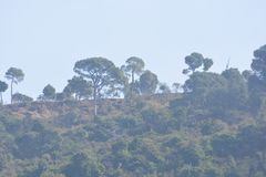 Landform зеленого холма с заводами и деревьями стоковые изображения rf
