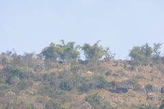 Landform зеленого холма с заводами и деревьями стоковое изображение