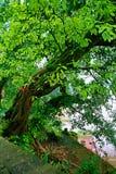 Landform Danxia в Chishui Стоковое Изображение