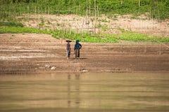 Landfrauen, die am Ackerland entlang dem Mekong pflanzen laos Stockfotos