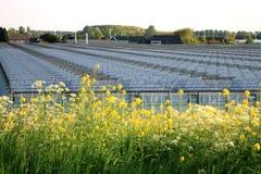 Landgeschäft - die Niederlande Stockbilder