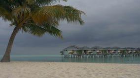 Landhäuser auf einer Tropeninsel mit Palmen und einem weißen sandigen Strand maldives stock video footage