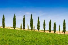 Landhaus mit Zypresse in Toskana, Italien stockbild