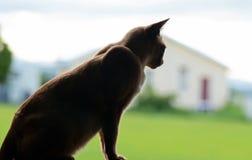 Landhauskatze, die auf Fensterleiste sitzt Stockfotografie