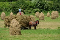 Landherbstarbeit stockfotos