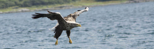 Landing Gear. Taken at the Isle of Mull on Loch Na Keal last year Royalty Free Stock Photo