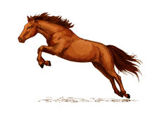 Landing or jumping horse at equine event sketch. Jumping stallion or horse, equine sport sketch. Racehorse mustang or broodmare, purebred wild chestnut mare Royalty Free Stock Image