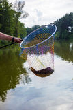 Landing net with caught fish Royalty Free Stock Image
