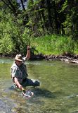 Landing a Rainbow. Trout in net stock photos