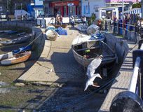 Free Landing Seagull Brixham Devon England UK Royalty Free Stock Images - 48364629