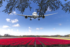 Landing on a tulips red carpet royalty free stock photos