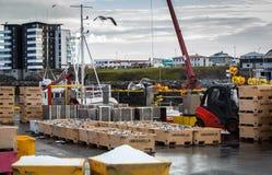 Landings of mackerel in Iceland Royalty Free Stock Photo