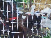 Landkatzen Lizenzfreies Stockbild