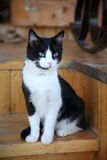 Landlady of the building. Cat sits on wooden step porch building Royalty Free Stock Photos