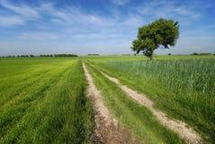 Landlandschaft Lizenzfreie Stockfotografie