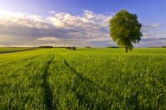 Landlandschaft Stockfotos