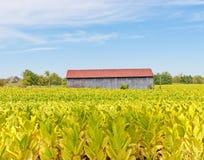 Landlandschaft Stockfoto