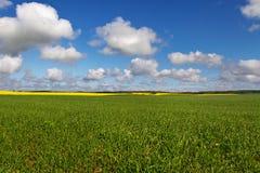 Landlandschaft mit Canola und Weizen Lizenzfreies Stockbild