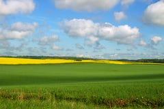 Landlandschaft mit Canola und Weizen Stockfoto