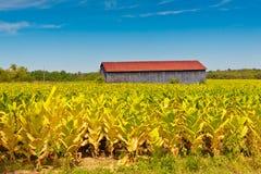 Landlandschaft mit Stall und Tabakanlagen stellen auf Lizenzfreie Stockfotos