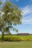 Landlandschaft mit Stall- und Tabakfeld. Lizenzfreie Stockbilder