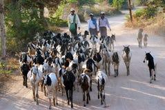 Landleben in Bagan Stockbild