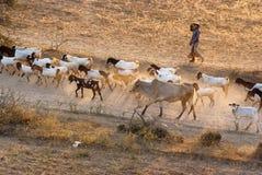 Landleben in Bagan Lizenzfreie Stockbilder