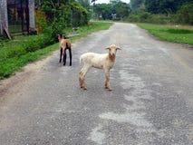 Landleben in Malaysia Lizenzfreies Stockfoto