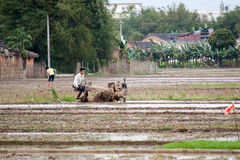 Landleben in Süd-China Stockfotos