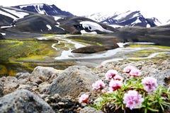 Landmannalaugar风景在冰岛夏天 库存图片