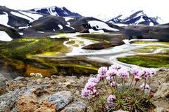 Landmannalaugar风景在冰岛夏天 免版税库存照片