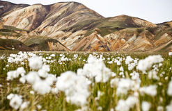 Landmannalaugar. Is a region near the volcano Hekla in the southern section of Iceland's highlands. The area is a popular tourist destination and hiking hub Royalty Free Stock Image