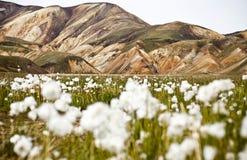 Landmannalaugar Imagem de Stock Royalty Free