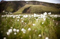 Landmannalaugar. Is a region near the volcano Hekla in the southern section of Iceland's highlands. The area is a popular tourist destination and hiking hub Stock Image