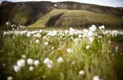 Landmannalaugar Imagem de Stock