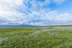 Landmannalaugar Royalty Free Stock Image