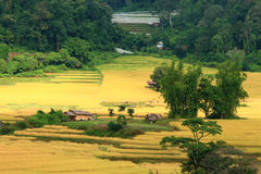The landmark of mae klang luangs paddy rice field Stock Photo