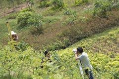 landmeters Stock Foto's
