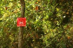 Landmine kennzeichnen innen das Holz von Kambodscha Lizenzfreie Stockfotografie