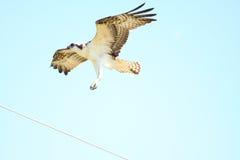 landningfiskgjuse Royaltyfri Bild