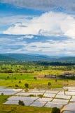 landpaddy Royaltyfri Fotografi