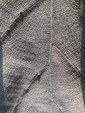 landpiece frondoso Ben-secco immagine stock