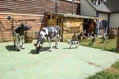 Landrace zoo gospodarstwo rolne od plastikowego wieprza dozownika na nowożytnej plastikowej podłodze na rancho zdjęcia stock
