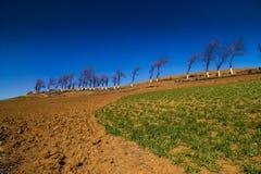 landredtrees Fotografering för Bildbyråer