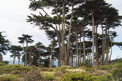 Lands End area,San-Francisco Bay. Royalty Free Stock Photography