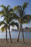 Lands End and Palm Trees. Lands End and the Baja penninsula are seen through crossed palm trees in Cabo San Lucas, Mexico Stock Photography