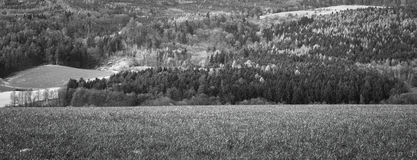Landsacpe. Green meadows and trees. White and black photo Stock Images