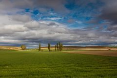 Landsacpe. Landscape of green grass with cloudy skies Royalty Free Stock Photography